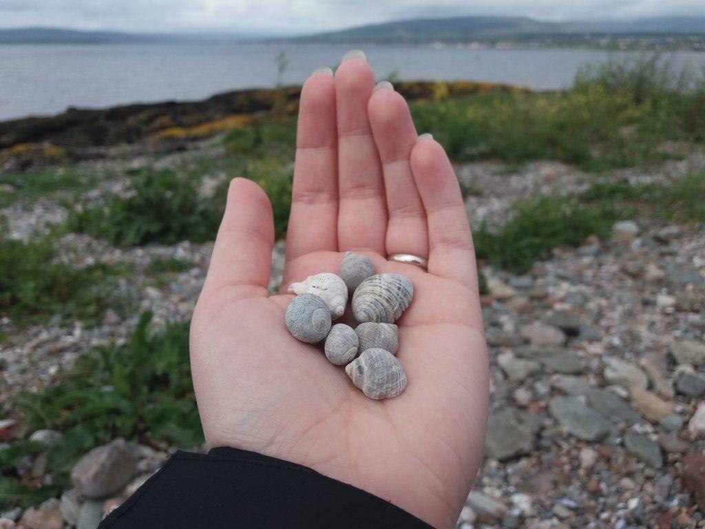 Lots of little shells