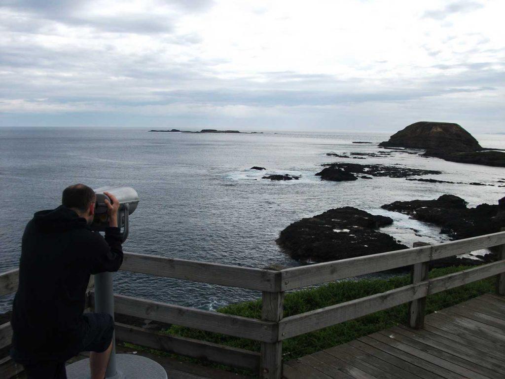 Seal Spotting at Nobbies Point on Phillip Island, Australia