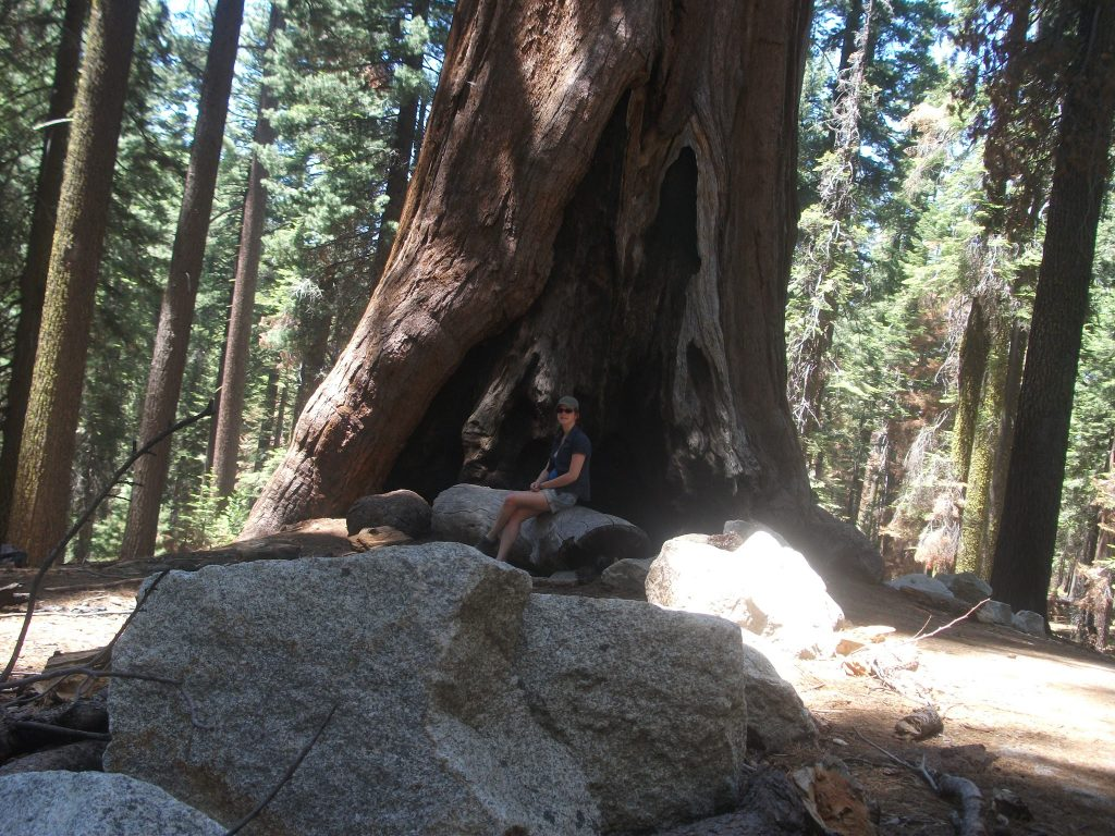 Sitting with one of the smaller Giant Sequoias in the Mariposa Grove in Yosemite National Park