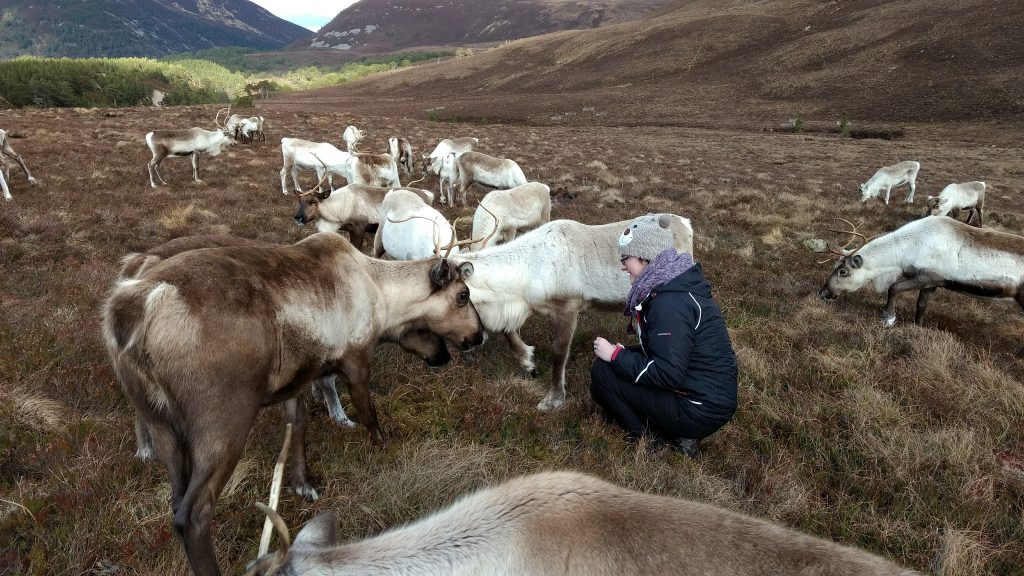 Sat with a group of Reindeer