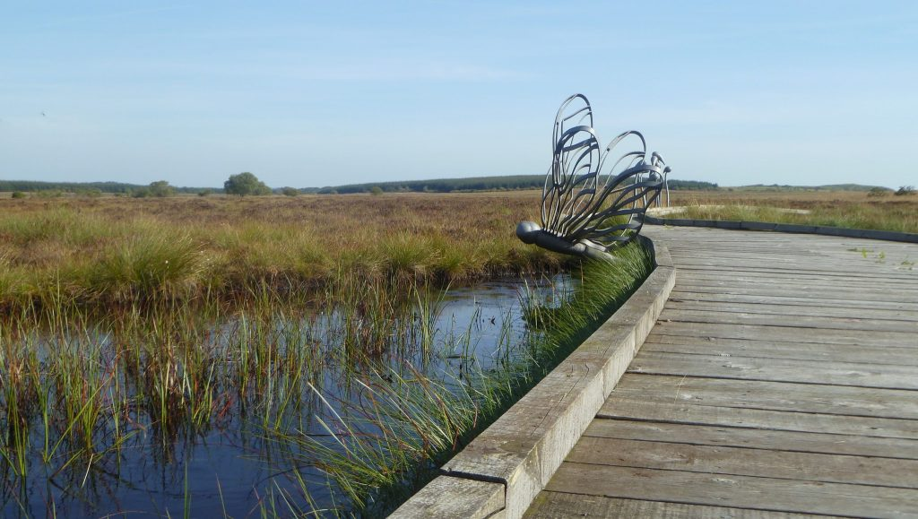 Dragonfly Pond on the Boardwalk at Blawhorn Moss National Nature Reserve