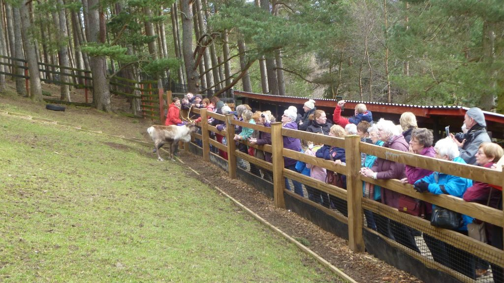 Hand Feeding at the Reindeer Center in Glenmore