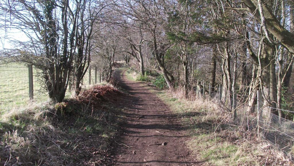 Empty trails on our wander around Chatelherault Country Park