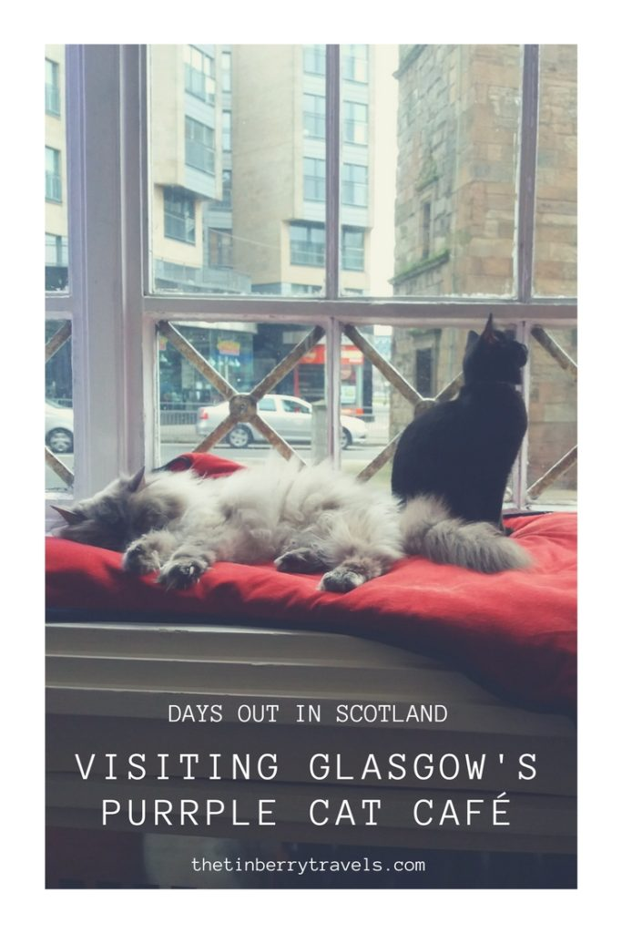 Cat cafes are one of the latest crazes that have made it over to the UK. We headed to our local option the Purrple Cat Cafe to find out what it's all about. Here's our guide to visiting Glasgow's Cat Cafe and our recommendations for a successful cafe session .   UK Cat Cafe   Cat Cafe Glasgow   #CatCafe #Scotland #Europe